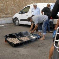Retour de pêche (Hammamet)