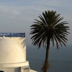 Rondeurs (Sidi Bou Saïd)